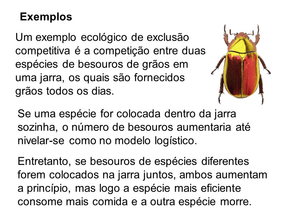 Exemplos Um exemplo ecológico de exclusão competitiva é a competição entre duas espécies de besouros de grãos em uma jarra, os quais são fornecidos gr
