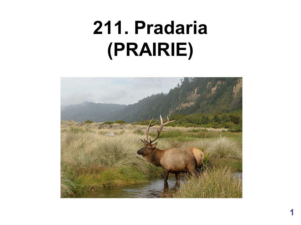 2 Uma pastagem molhada natural na Florida é chamada de pradaria.