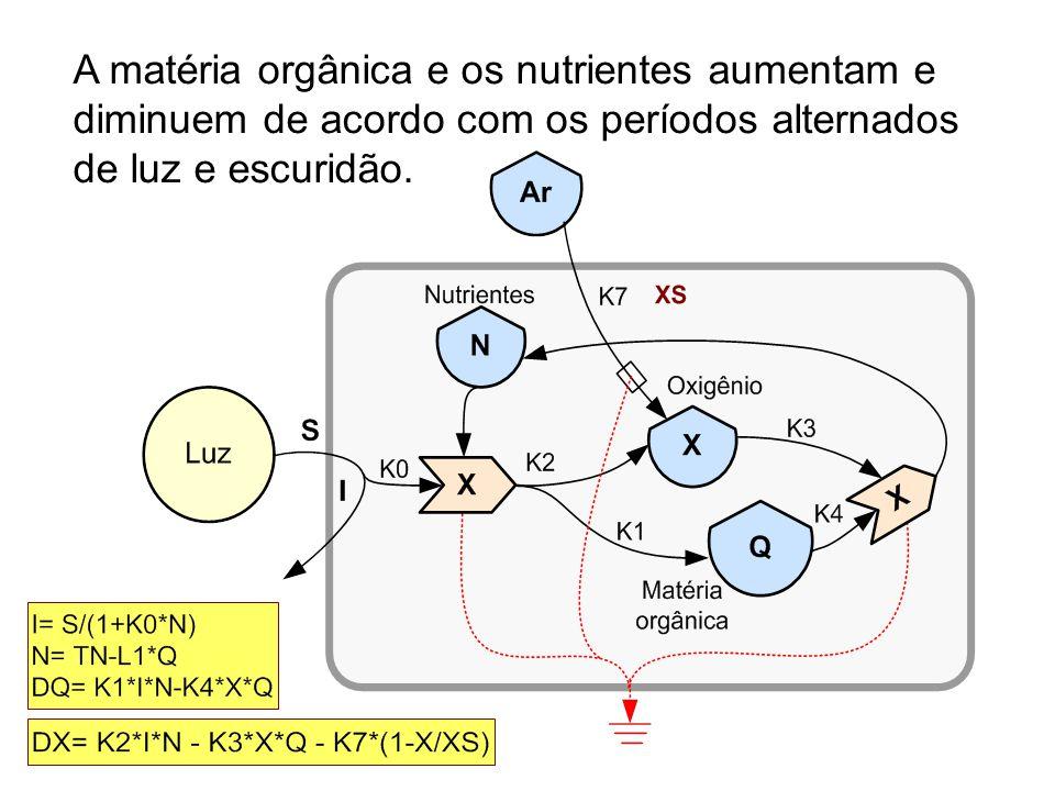 A matéria orgânica e os nutrientes aumentam e diminuem de acordo com os períodos alternados de luz e escuridão.