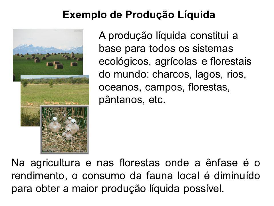 Exemplo de Produção Líquida A produção líquida constitui a base para todos os sistemas ecológicos, agrícolas e florestais do mundo: charcos, lagos, ri