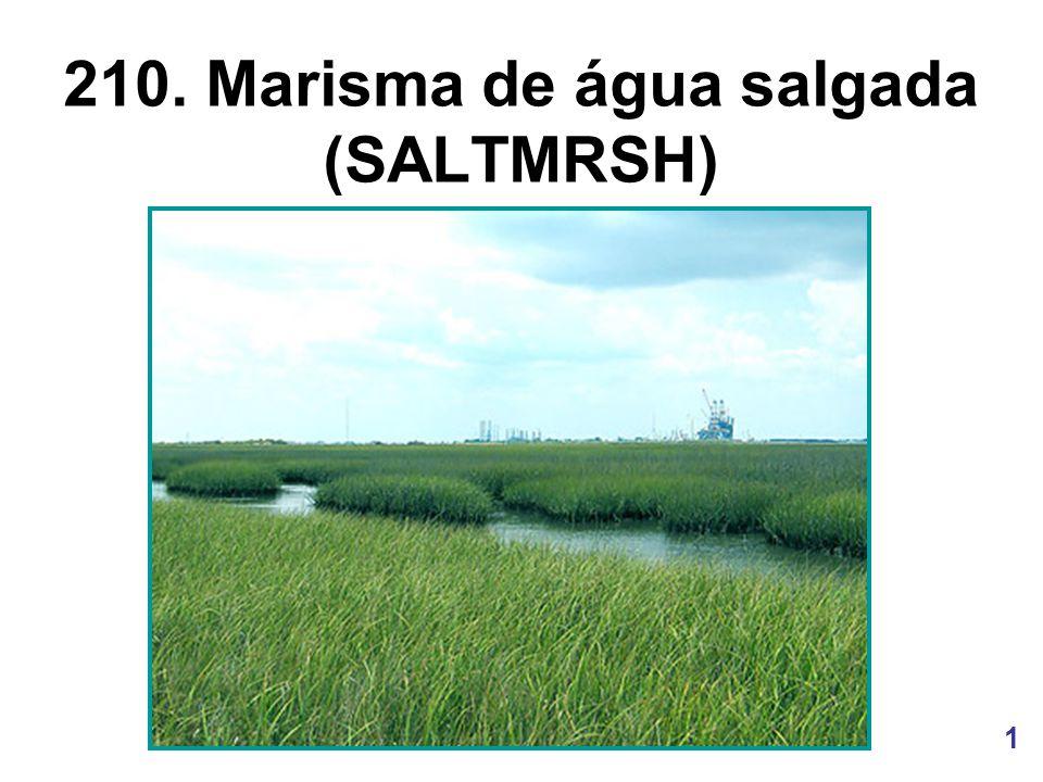 1 210. Marisma de água salgada (SALTMRSH)