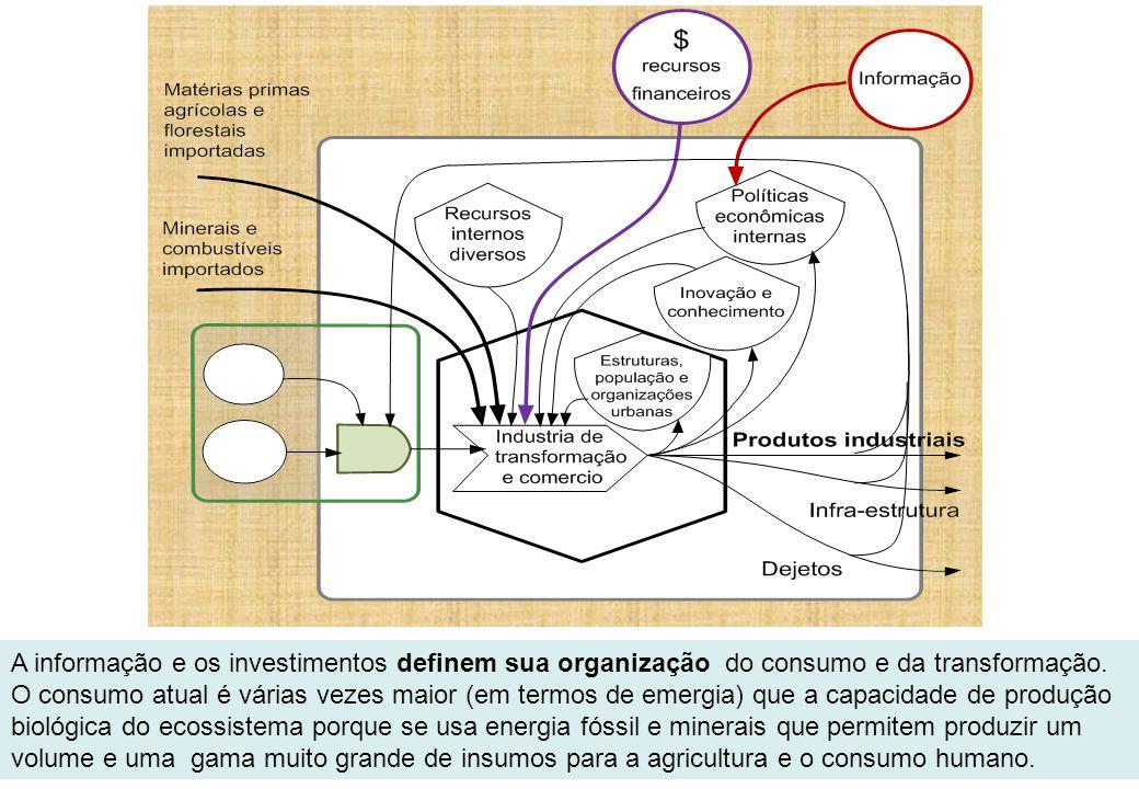 A informação e os investimentos definem sua organização do consumo e da transformação. O consumo atual é várias vezes maior (em termos de emergia) que