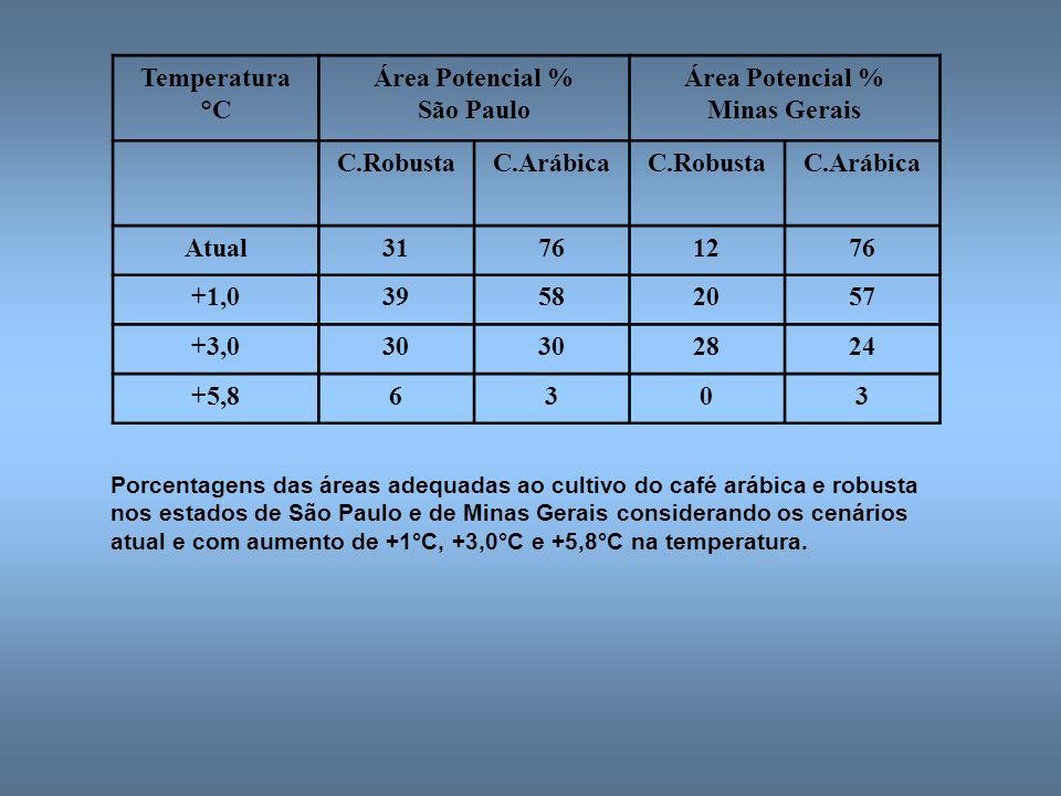 Temperatura °C Área Potencial % São Paulo Área Potencial % Minas Gerais C.RobustaC.ArábicaC.RobustaC.Arábica Atual31761276 +1,039582057 +3,030 2824 +5,86303 Porcentagens das áreas adequadas ao cultivo do café arábica e robusta nos estados de São Paulo e de Minas Gerais considerando os cenários atual e com aumento de +1°C, +3,0°C e +5,8°C na temperatura.