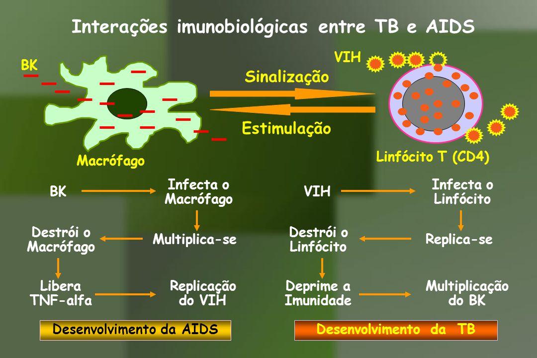 Sinalização Estimulação BK Macrófago Linfócito T (CD4) VIH Interações imunobiológicas entre TB e AIDS Infecta o Macrófago Multiplica-se Destrói o Macr