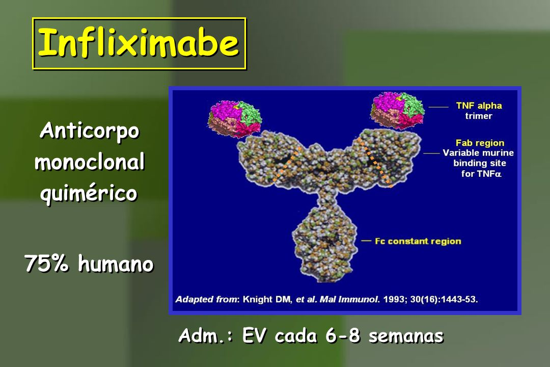 Anticorpo monoclonal quimérico Anticorpo monoclonal quimérico 75% humano Adm.: EV cada 6-8 semanas Infliximabe