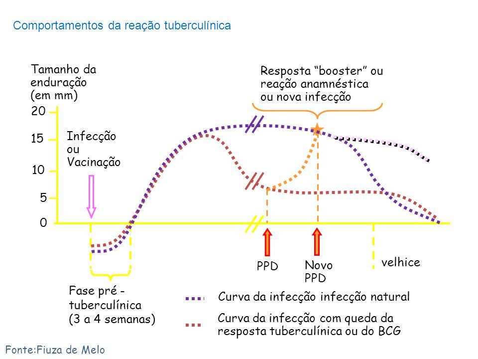 Comportamentos da reação tuberculínica Fase pré - tuberculínica (3 a 4 semanas) 0 5 15 10 20 Tamanho da enduração (em mm) velhice Curva da infecção co