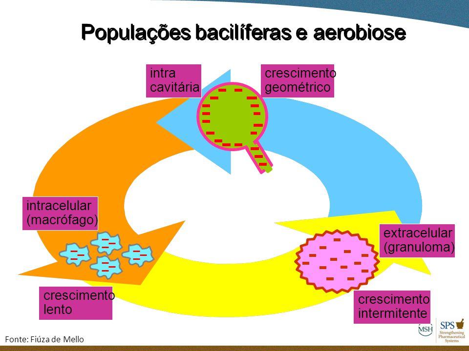 intracelular (macrófago) crescimento lento extracelular (granuloma) crescimento intermitente Populações bacilíferas e aerobiose intra cavitária cresci