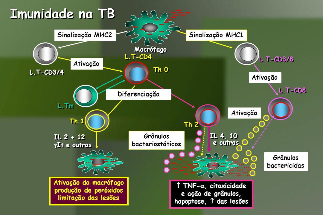 Imunidade na TB Sinalização MHC1Sinalização MHC2 L.T-CD3/8 L.T-CD3/4 Macrófago 4 L.T-CD8 Ativação L.T-CD4 Th 0 Ativação Ativação do macrófago produção de peróxidos limitação das lesões IL 2 + 12  It e outras IL 2 + 12  It e outras L.Tm Th 1 Th 2 Diferenciação  TNF- , citoxicidade e ação de grânulos, hapoptose,  das lesões IL 4, 10 e outras IL 4, 10 e outras Ativação Grânulos bactericidas Grânulos bacteriostáticos