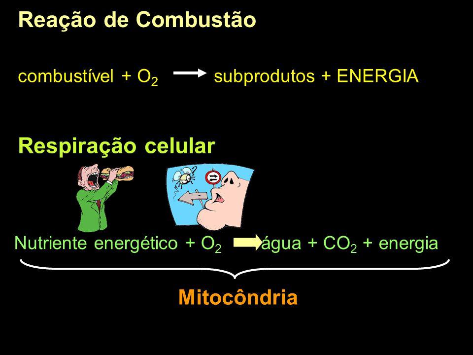 Reação de Combustão combustível + O 2 subprodutos + ENERGIA Respiração celular Nutriente energético + O 2 água + CO 2 + energia Mitocôndria