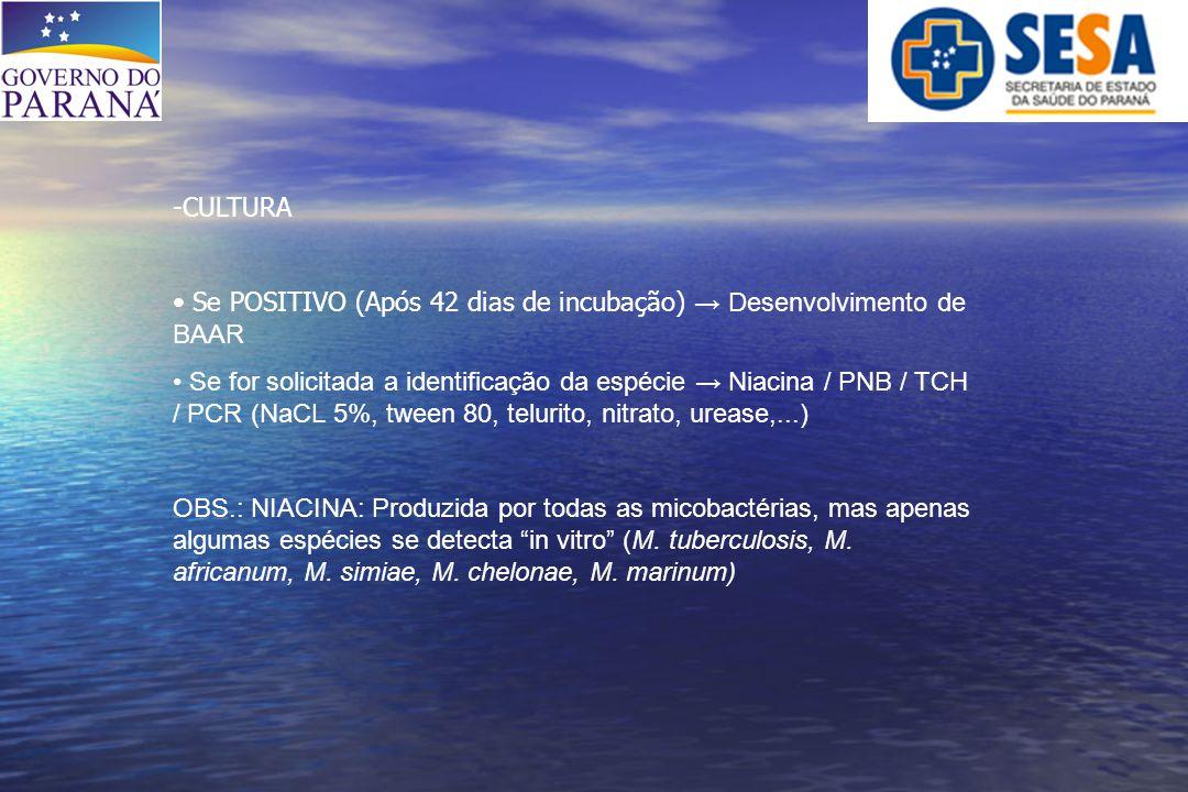 -CULTURA Se POSITIVO (Após 42 dias de incubação) → Desenvolvimento de BAAR Se for solicitada a identificação da espécie → Niacina / PNB / TCH / PCR (N