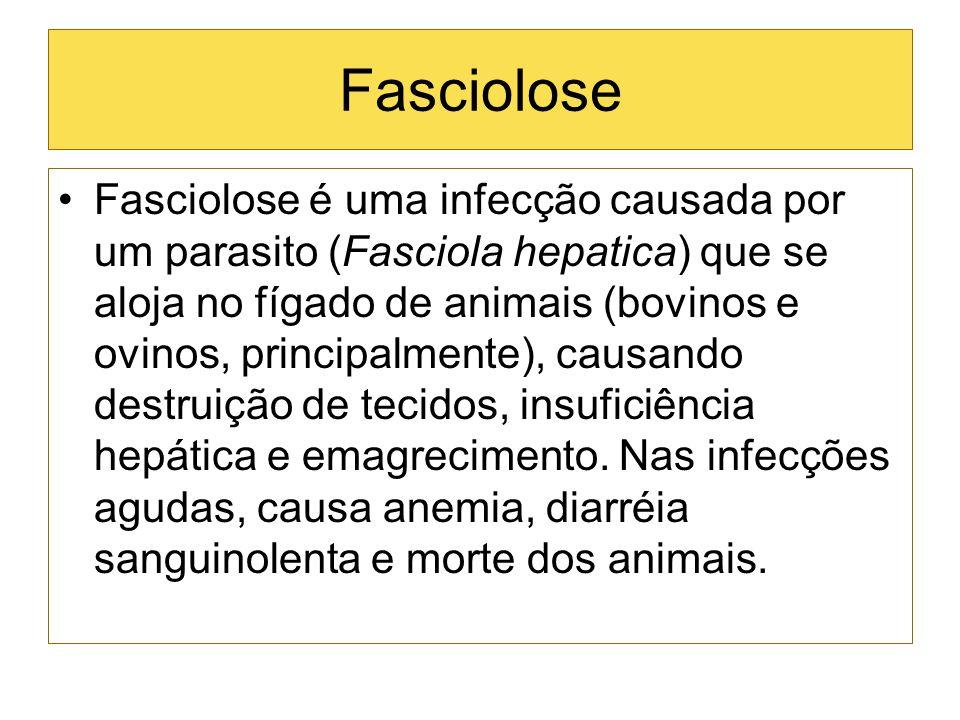 Fasciolose Fasciolose é uma infecção causada por um parasito (Fasciola hepatica) que se aloja no fígado de animais (bovinos e ovinos, principalmente),