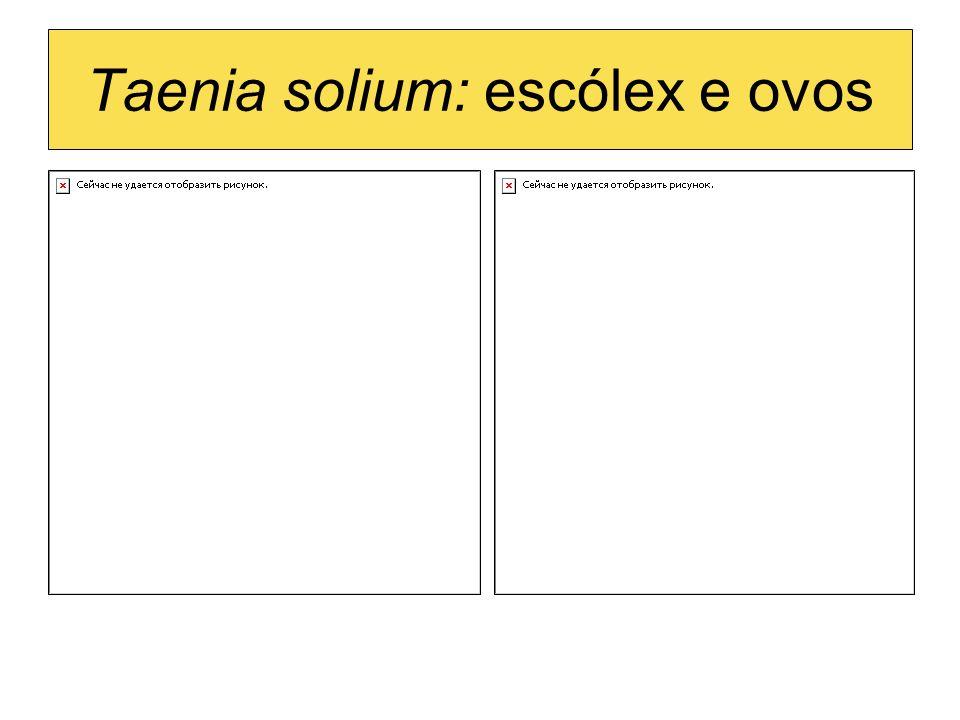 Taenia solium: escólex e ovos
