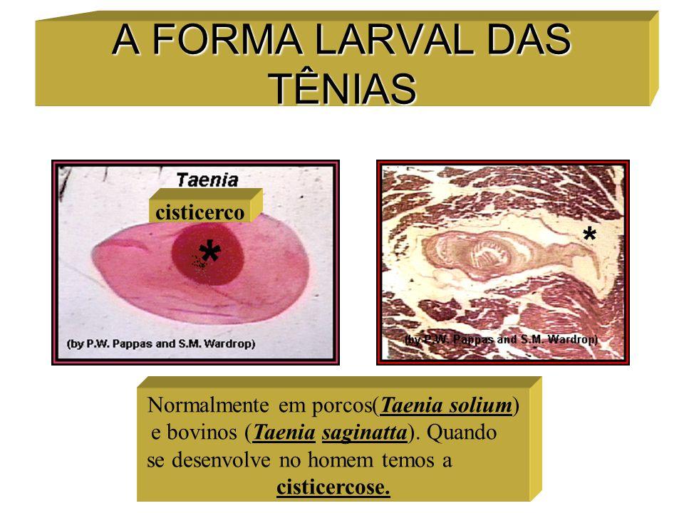 A FORMA LARVAL DAS TÊNIAS cisticerco Normalmente em porcos(Taenia solium) e bovinos (Taenia saginatta). Quando se desenvolve no homem temos a cisticer