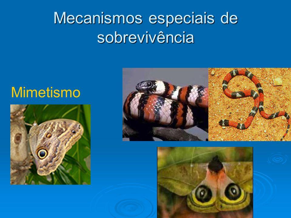 Mecanismos especiais de sobrevivência Mimetismo
