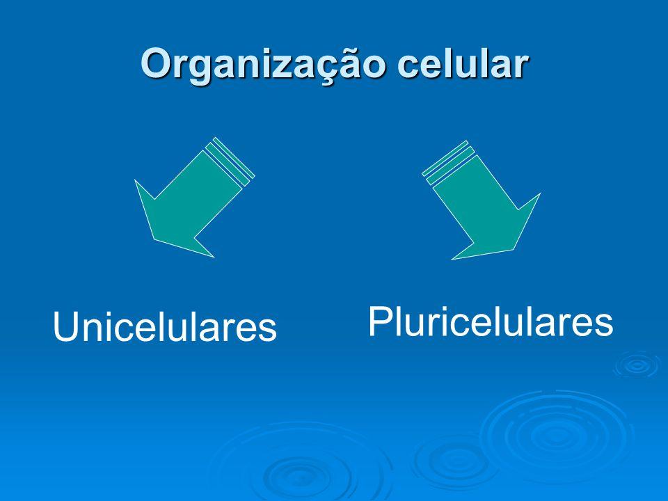 Organização celular Unicelulares Pluricelulares