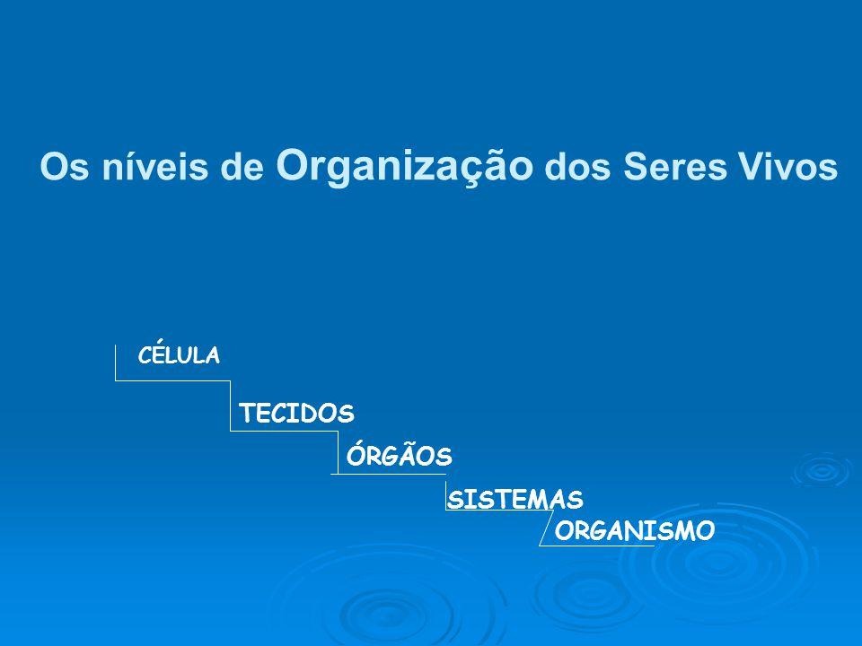 CÉLULA TECIDOS ÓRGÃOS SISTEMAS ORGANISMO Os níveis de Organização dos Seres Vivos