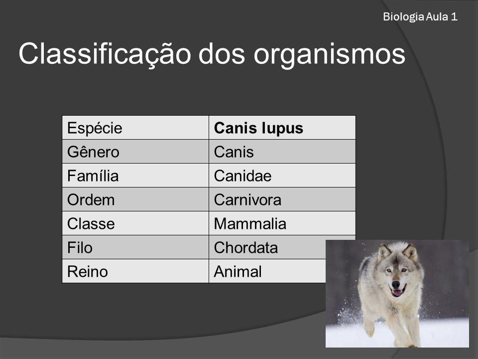 Biologia Aula 1 Classificação dos organismos EspécieCanis lupus GêneroCanis FamíliaCanidae OrdemCarnivora ClasseMammalia FiloChordata ReinoAnimal
