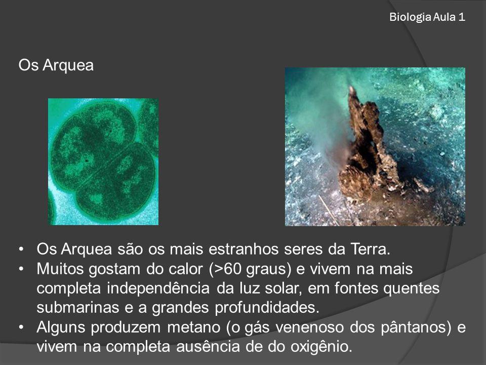 Os Arquea são os mais estranhos seres da Terra. Muitos gostam do calor (>60 graus) e vivem na mais completa independência da luz solar, em fontes quen
