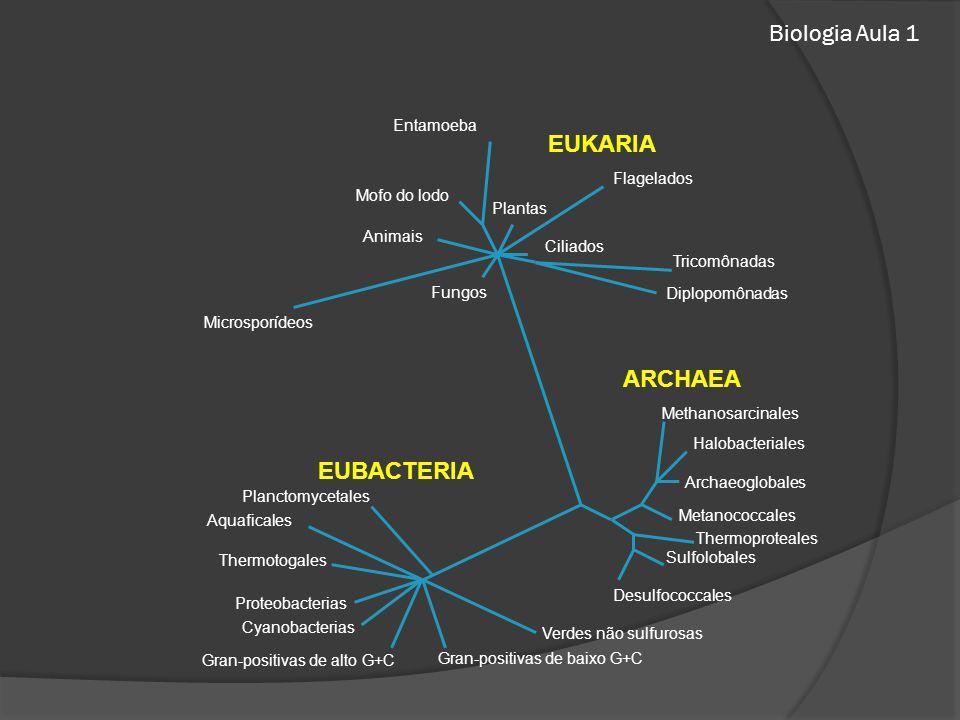 Biologia Aula 1 Entamoeba Mofo do lodo Animais Plantas Flagelados Microsporídeos Ciliados Fungos Tricomônadas Diplopomônadas Methanosarcinales Halobacteriales Archaeoglobales Metanococcales Sulfolobales Desulfococcales Planctomycetales Aquaficales Thermoproteales Thermotogales Proteobacterias Cyanobacterias Gran-positivas de alto G+C Gran-positivas de baixo G+C Verdes não sulfurosas EUBACTERIA ARCHAEA EUKARIA