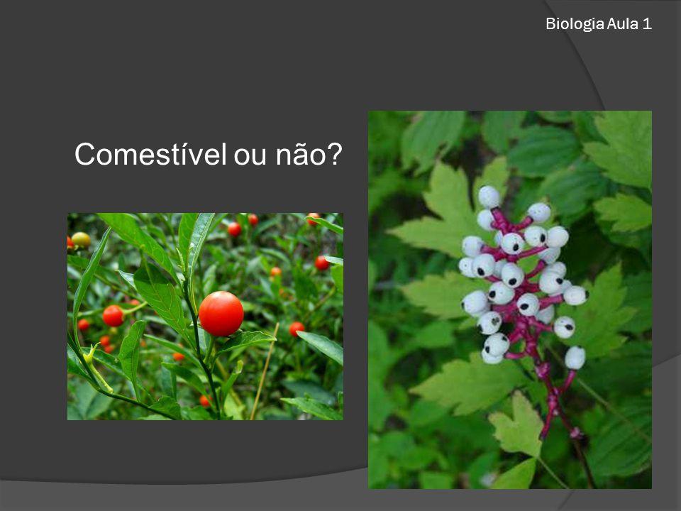 Biologia Aula 1 Comestível ou não?