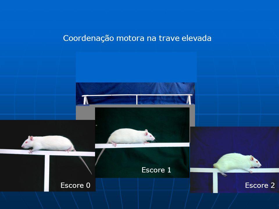 Coordenação motora na trave elevada Escore 0 Escore 1 Escore 2