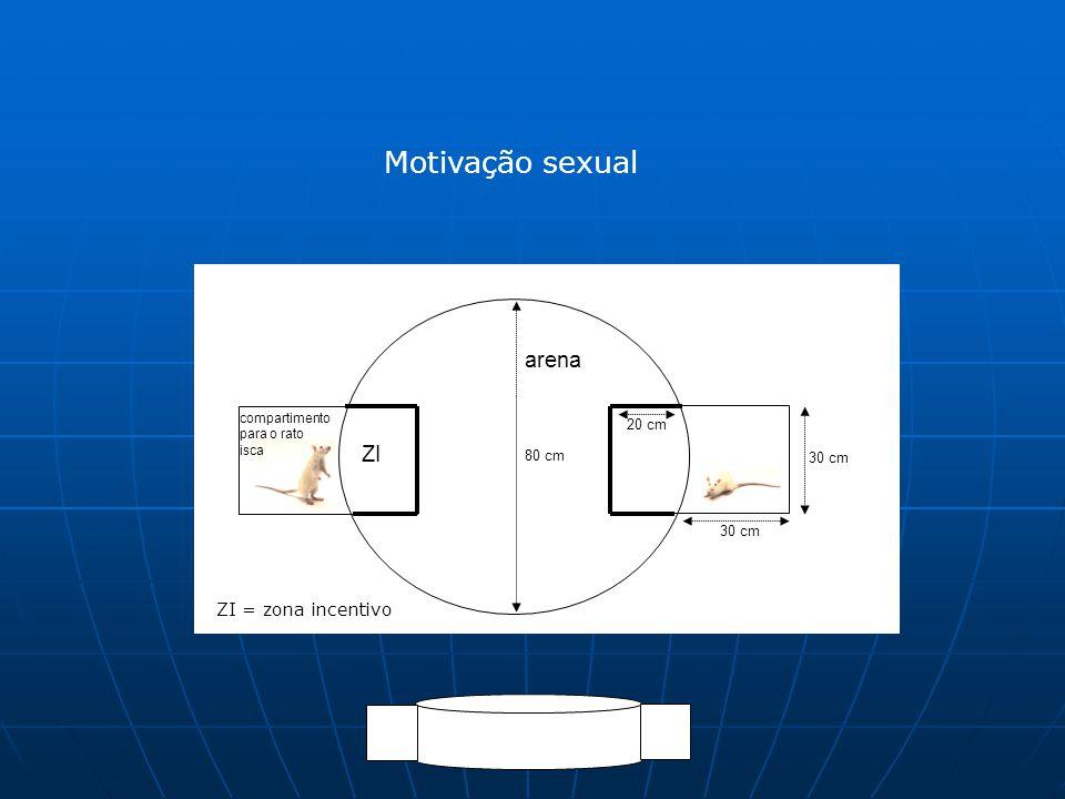 Motivação sexual 30 cm 20 cm ZI arena compartimento para o rato isca 80 cm ZI = zona incentivo