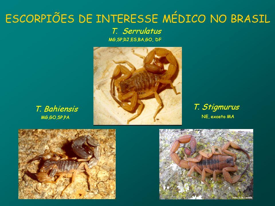ESCORPIÕES DE INTERESSE MÉDICO NO BRASIL T.Serrulatus MG,SP,RJ,ES,BA,GO, DF T.