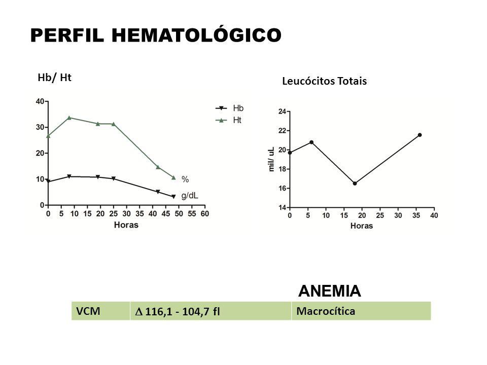 PERFIL HEMATOLÓGICO VCM  116,1 - 104,7 fl Macrocítica Hb/ Ht Leucócitos Totais ANEMIA