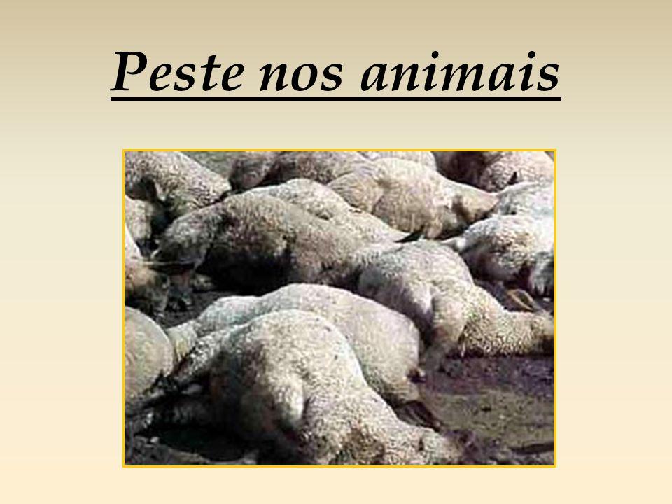 Peste nos animais