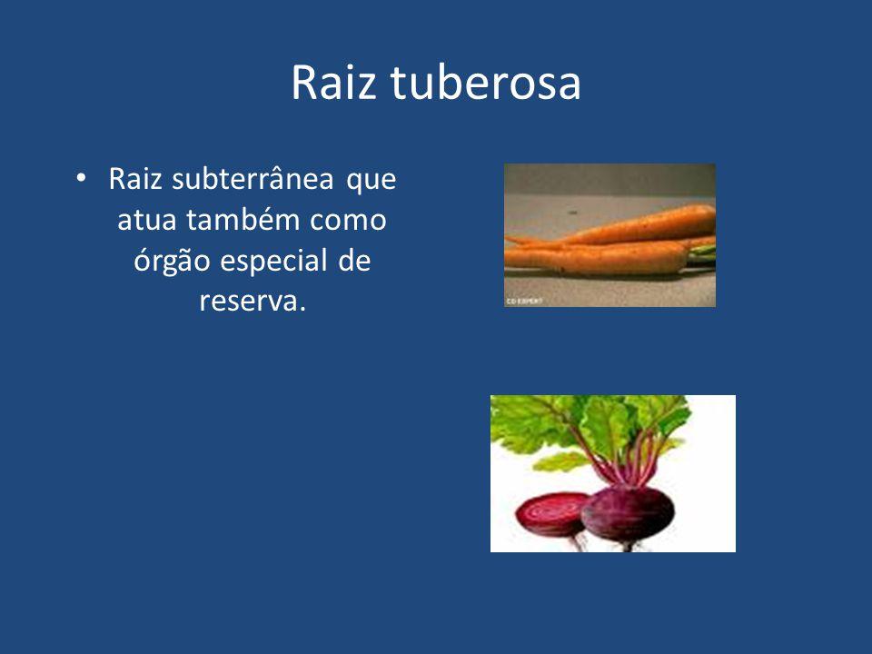 Raiz tuberosa Raiz subterrânea que atua também como órgão especial de reserva.