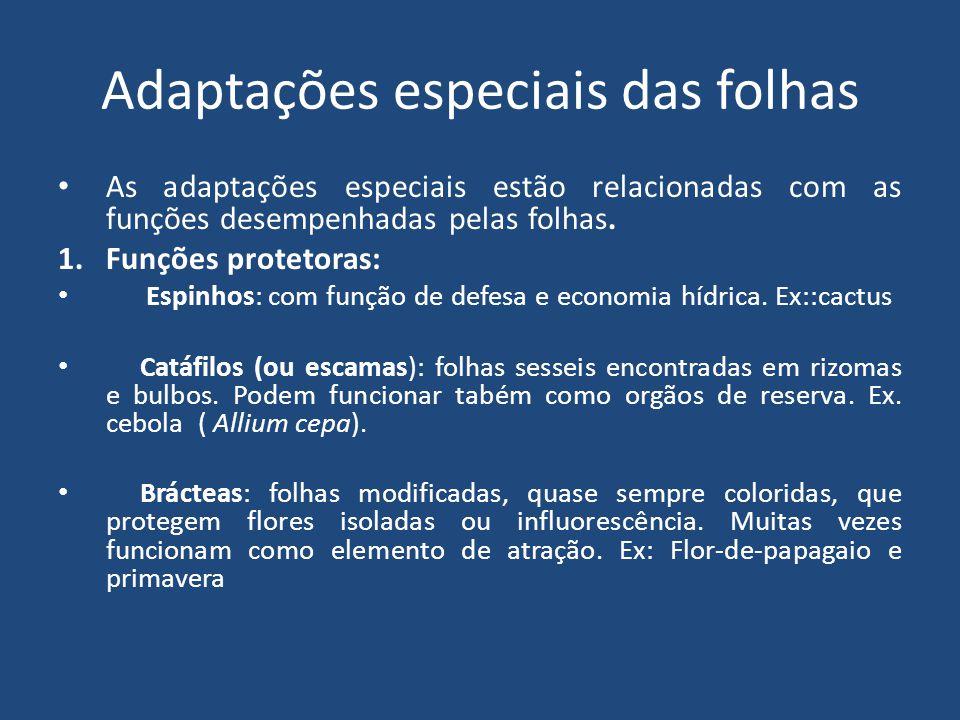 Adaptações especiais das folhas As adaptações especiais estão relacionadas com as funções desempenhadas pelas folhas. 1.Funções protetoras: Espinhos: