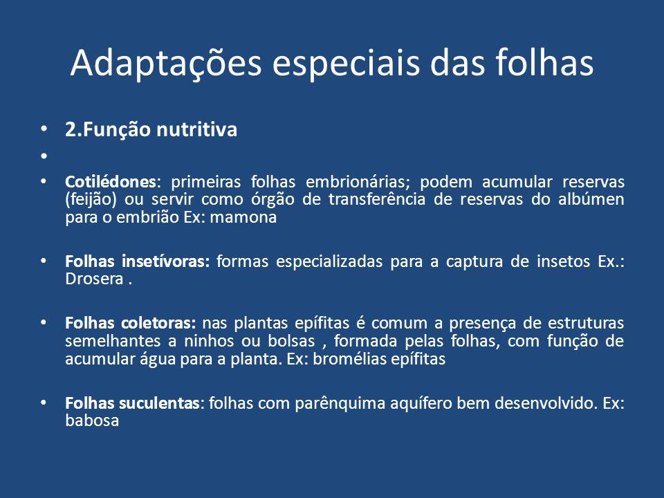 Adaptações especiais das folhas 2.Função nutritiva Cotilédones: primeiras folhas embrionárias; podem acumular reservas (feijão) ou servir como órgão d