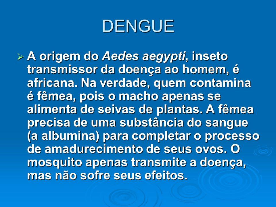 DENGUE  A origem do Aedes aegypti, inseto transmissor da doença ao homem, é africana. Na verdade, quem contamina é fêmea, pois o macho apenas se alim