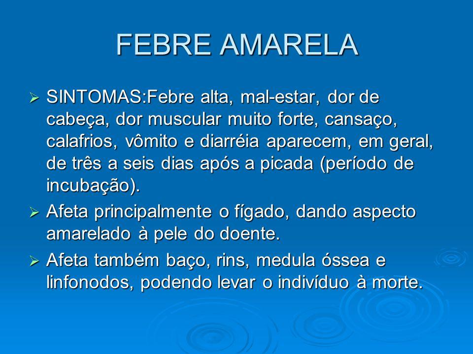 FEBRE AMARELA  SINTOMAS:Febre alta, mal-estar, dor de cabeça, dor muscular muito forte, cansaço, calafrios, vômito e diarréia aparecem, em geral, de