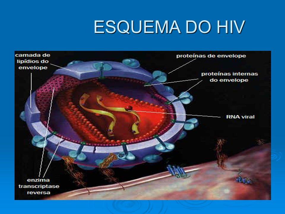 ESQUEMA DO HIV ESQUEMA DO HIV