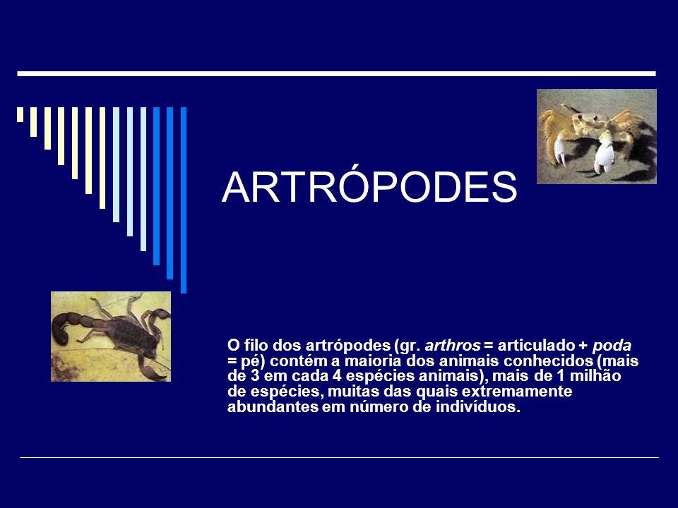 ARTRÓPODES O filo dos artrópodes (gr. arthros = articulado + poda = pé) contém a maioria dos animais conhecidos (mais de 3 em cada 4 espécies animais)