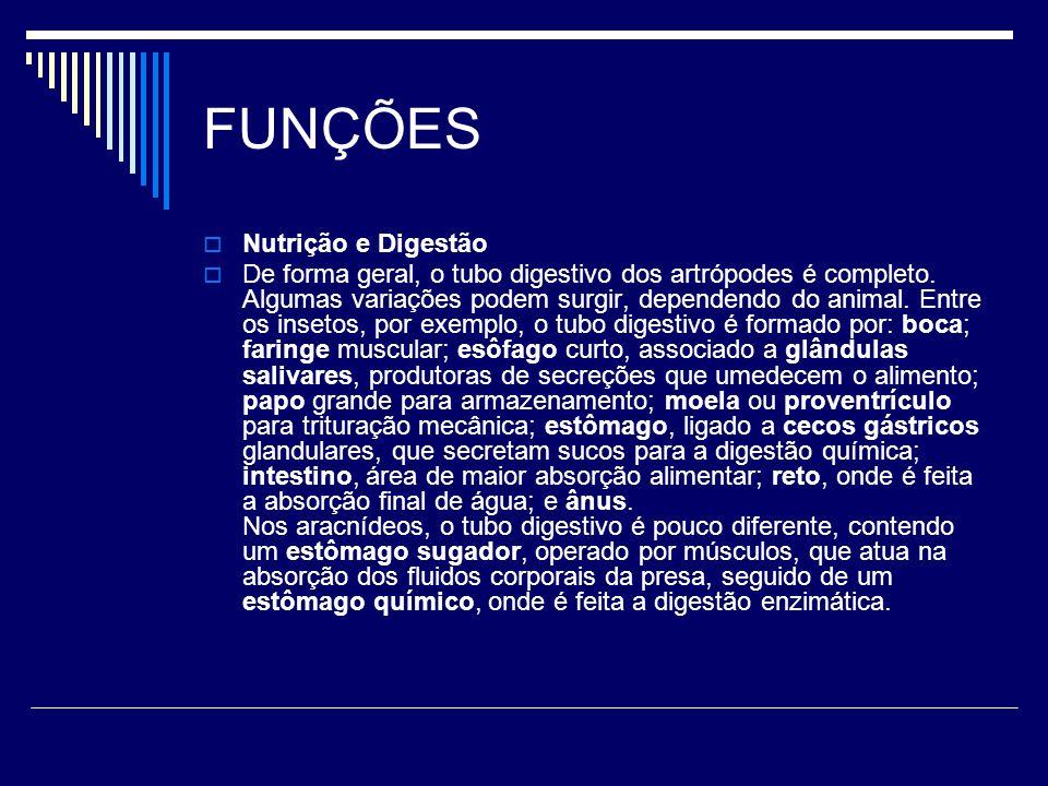FUNÇÕES  Nutrição e Digestão  De forma geral, o tubo digestivo dos artrópodes é completo. Algumas variações podem surgir, dependendo do animal. Entr