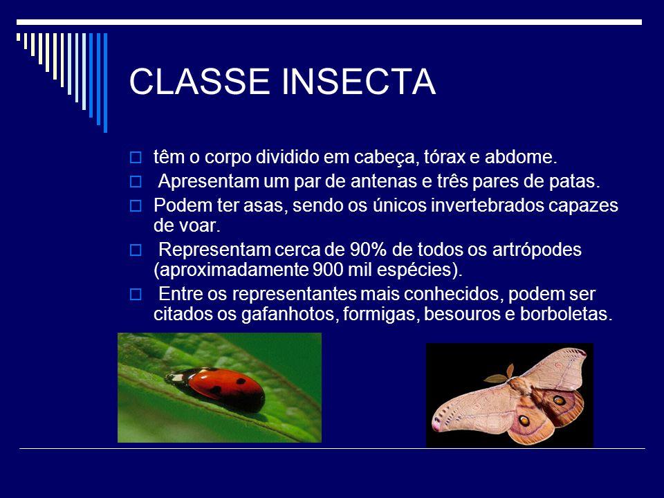 CLASSE INSECTA  têm o corpo dividido em cabeça, tórax e abdome.  Apresentam um par de antenas e três pares de patas.  Podem ter asas, sendo os únic