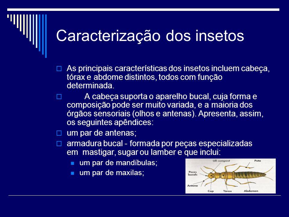 Caracterização dos insetos  As principais características dos insetos incluem cabeça, tórax e abdome distintos, todos com função determinada.  A cab