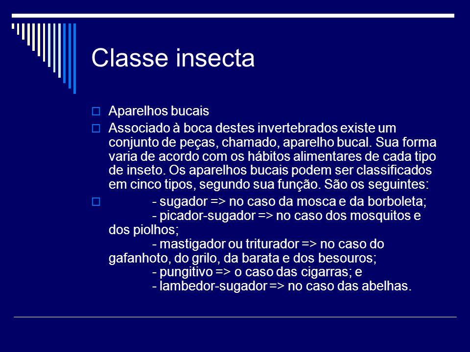 Classe insecta  Aparelhos bucais  Associado à boca destes invertebrados existe um conjunto de peças, chamado, aparelho bucal. Sua forma varia de aco