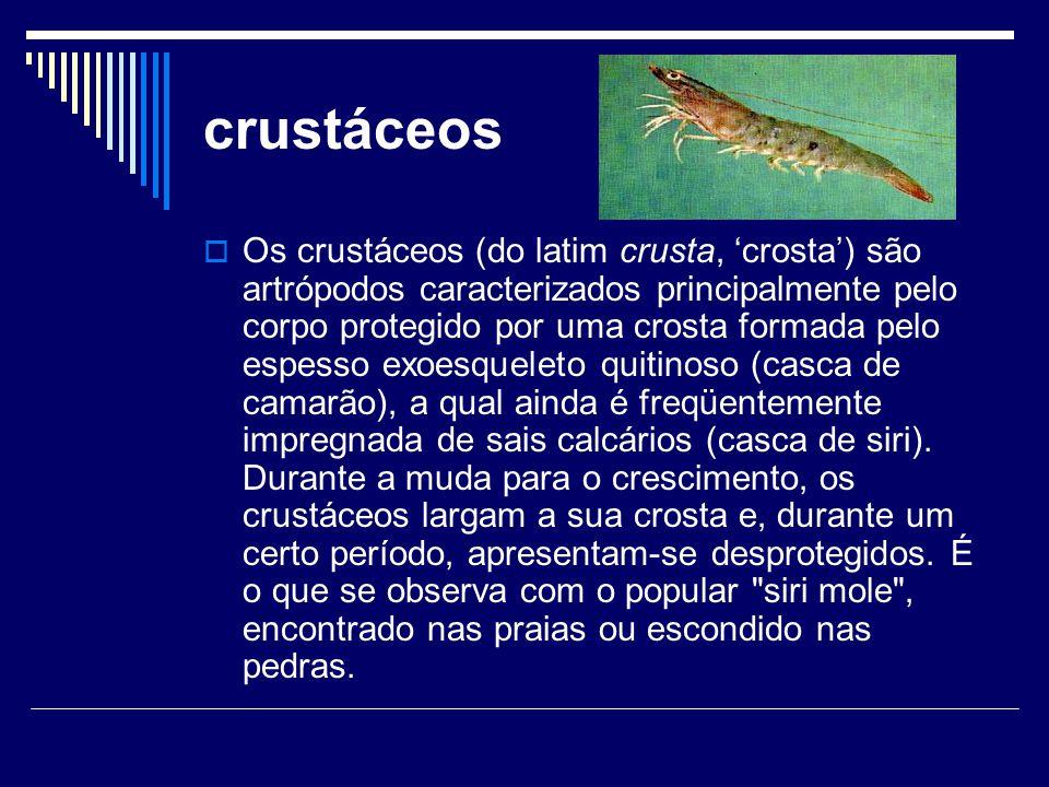 crustáceos  Os crustáceos (do latim crusta, 'crosta') são artrópodos caracterizados principalmente pelo corpo protegido por uma crosta formada pelo e