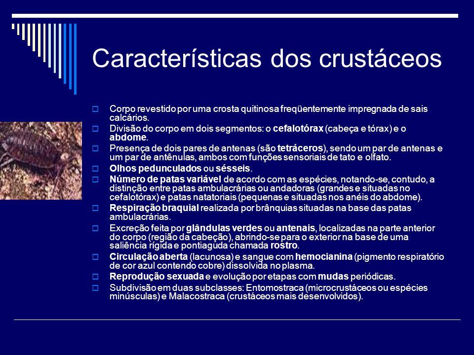 Características dos crustáceos  Corpo revestido por uma crosta quitinosa freqüentemente impregnada de sais calcários.  Divisão do corpo em dois segm