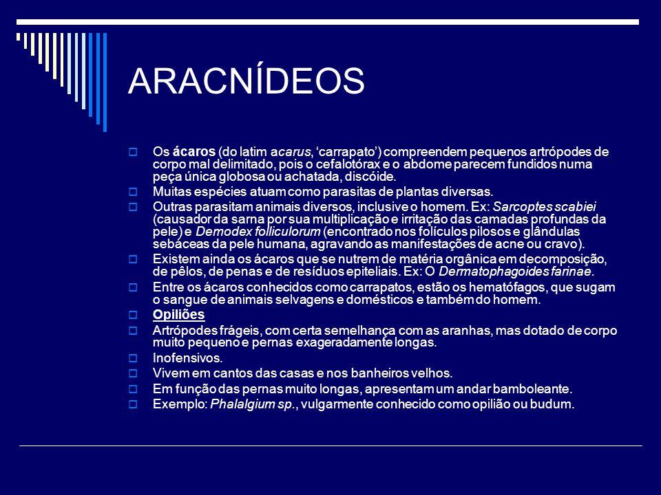 ARACNÍDEOS  Os ácaros (do latim acarus, 'carrapato') compreendem pequenos artrópodes de corpo mal delimitado, pois o cefalotórax e o abdome parecem f