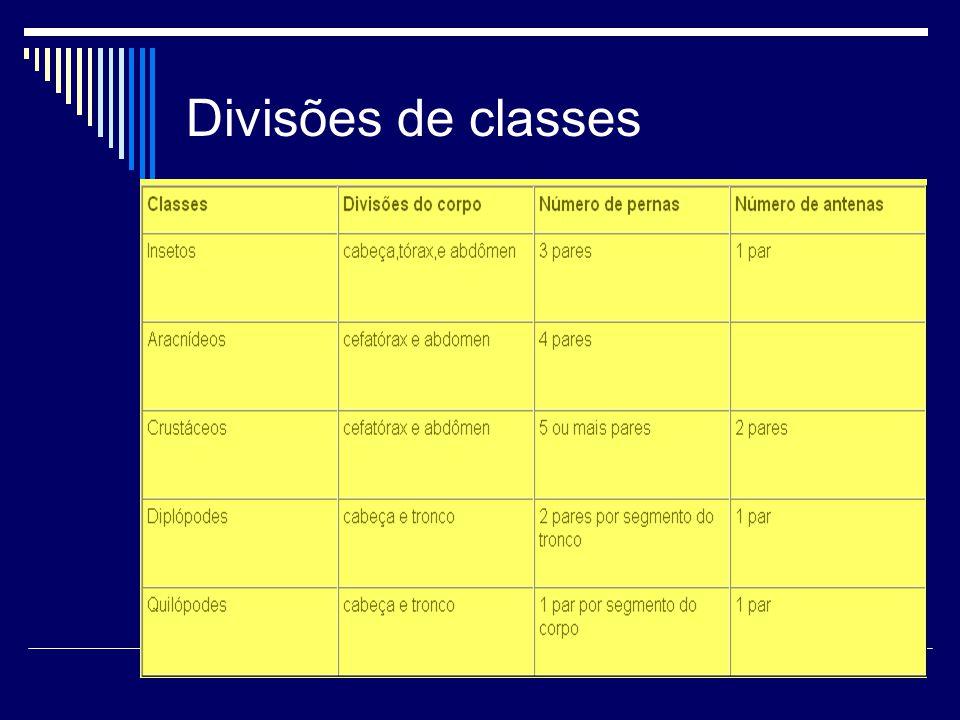 Divisões de classes