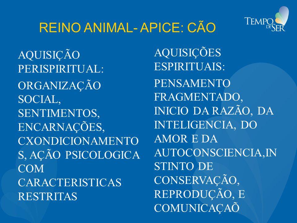 REINO ANIMAL- APICE: CÃO AQUISIÇÃO PERISPIRITUAL: ORGANIZAÇÃO SOCIAL, SENTIMENTOS, ENCARNAÇÕES, CXONDICIONAMENTO S, AÇÃO PSICOLOGICA COM CARACTERISTICAS RESTRITAS AQUISIÇÕES ESPIRITUAIS: PENSAMENTO FRAGMENTADO, INICIO DA RAZÃO, DA INTELIGENCIA, DO AMOR E DA AUTOCONSCIENCIA,IN STINTO DE CONSERVAÇÃO, REPRODUÇÃO, E COMUNICAÇAÕ