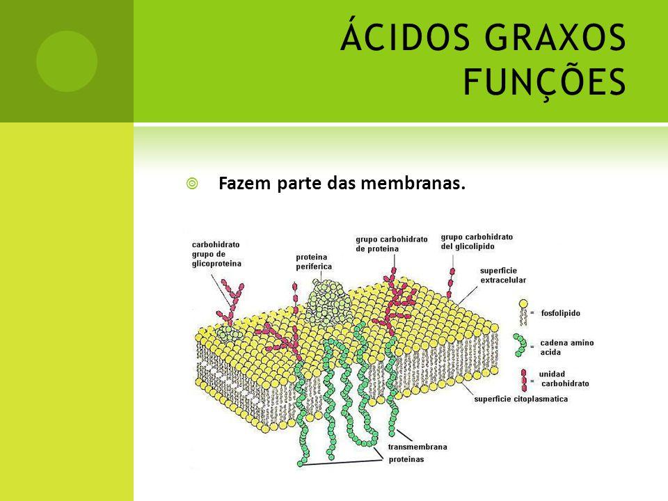 ÁCIDOS GRAXOS FUNÇÕES  Fazem parte das membranas.