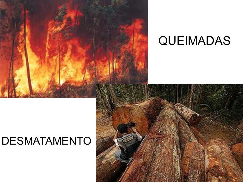 QUEIMADAS DESMATAMENTO