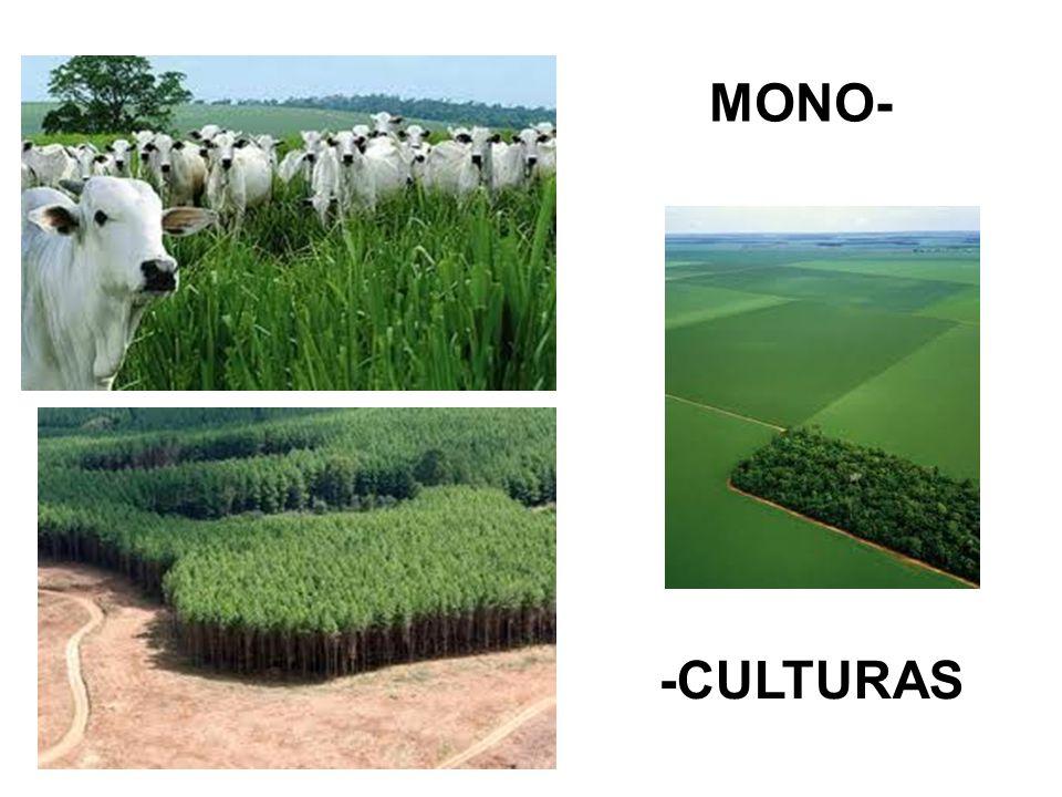 MONO- -CULTURAS
