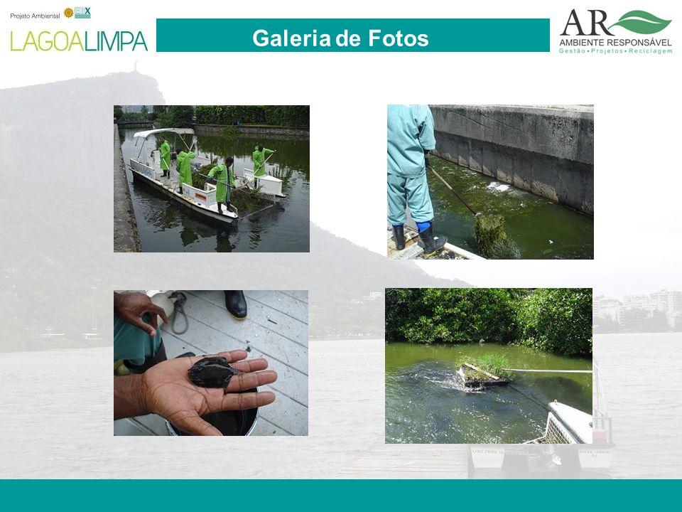 Pag. 17 Galeria de Fotos