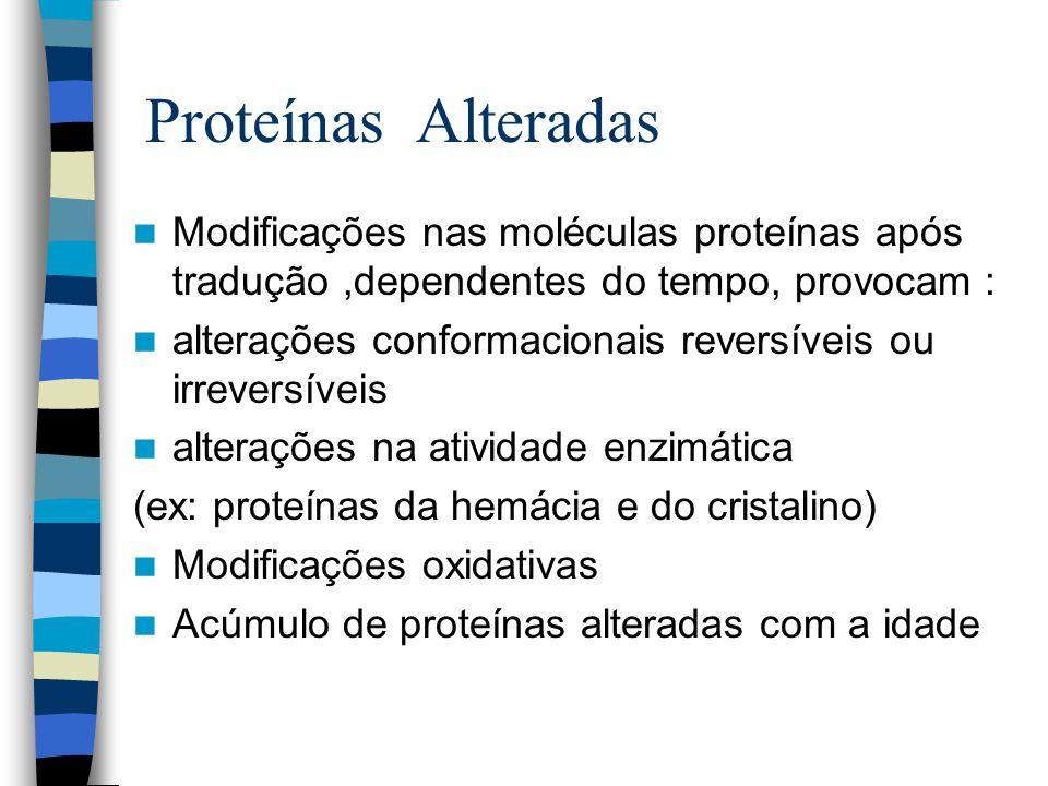 Proteínas Alteradas Modificações nas moléculas proteínas após tradução,dependentes do tempo, provocam : alterações conformacionais reversíveis ou irreversíveis alterações na atividade enzimática (ex: proteínas da hemácia e do cristalino) Modificações oxidativas Acúmulo de proteínas alteradas com a idade